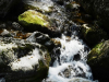 Černý potok