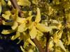 Jarní kvítka II