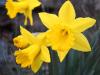 Jarní kvítka