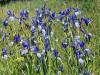 Kvetoucí Pošumaví