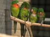 Papouští zoo